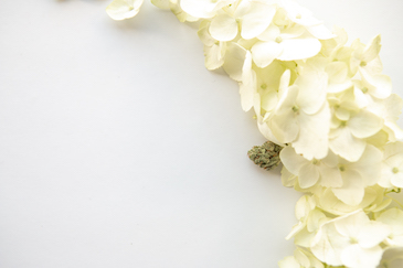 Shop The Cannabis Wedding Collection - The Cannabiz Agency Images
