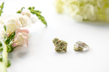 Shop The Cannabis Wedding Collection stock photos - The Cannabiz Agency Images